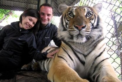 wayfinding-thailand-tigers-10
