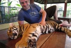 wayfinding-thailand-tigers-6