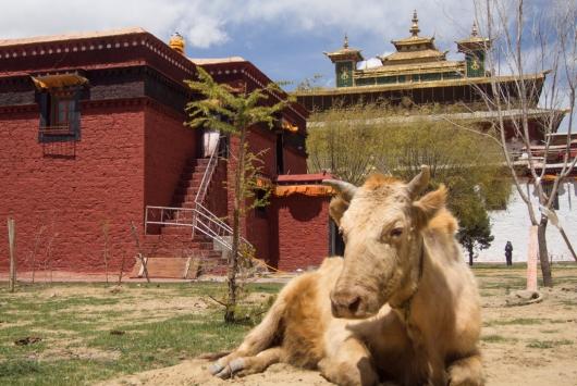 wayfinding-samye-tibet-23
